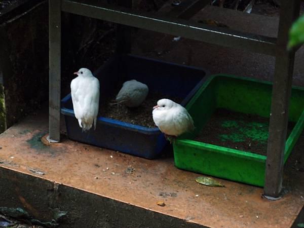 20130625拍攝於鳳凰谷鳥園116.JPG