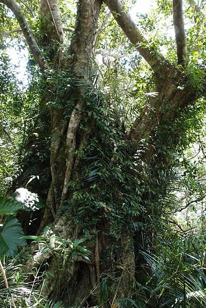 20130906拍攝於雙流森林公園008.JPG