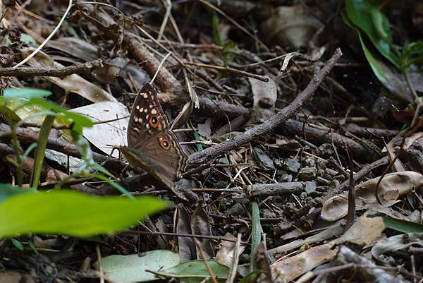 20130906拍攝於雙流森林公園011.JPG