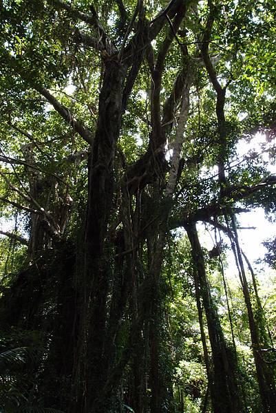 20130906拍攝於雙流森林公園012.JPG