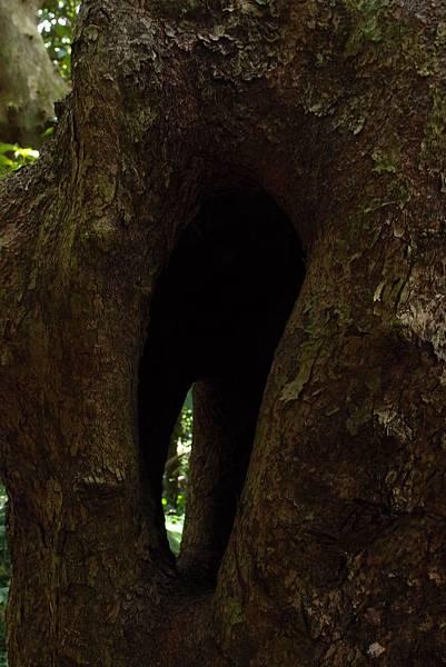 20130906拍攝於雙流森林公園014.JPG