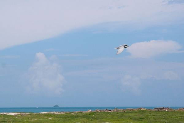 20140617拍攝於龍門後灣沙灘011