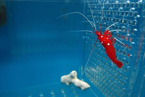 20140618拍攝於螃蟹博物館006