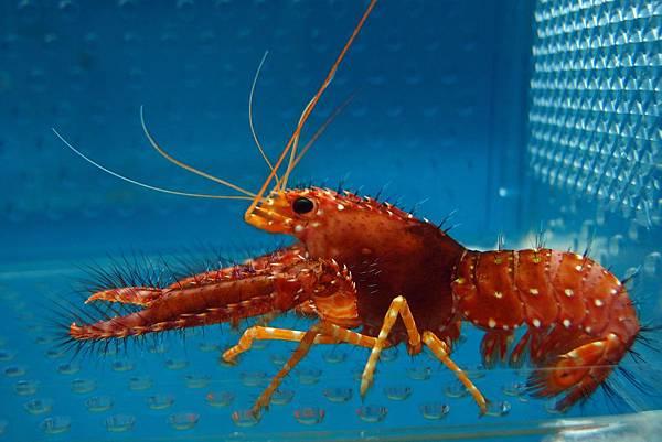20140618拍攝於螃蟹博物館005