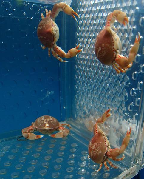 20140618拍攝於螃蟹博物館009