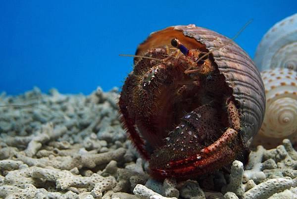 20140618拍攝於螃蟹博物館026