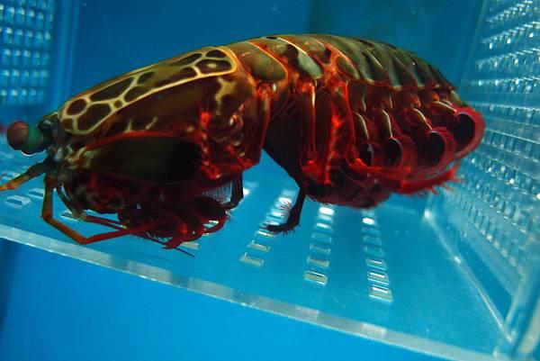 20140618拍攝於螃蟹博物館041