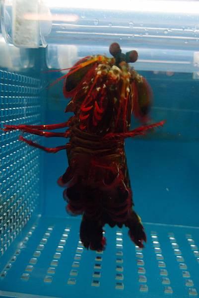 20140618拍攝於螃蟹博物館040