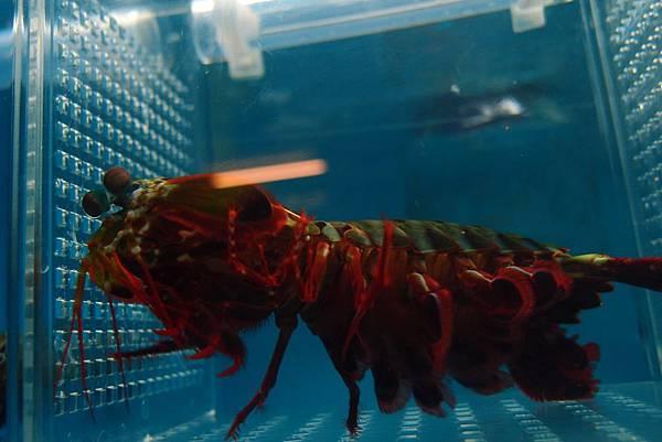 20140618拍攝於螃蟹博物館048