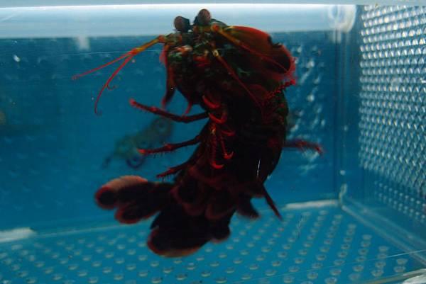 20140618拍攝於螃蟹博物館044
