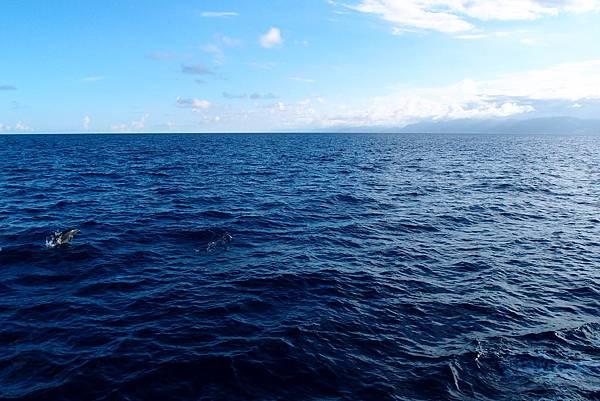 20140827賞鯨091