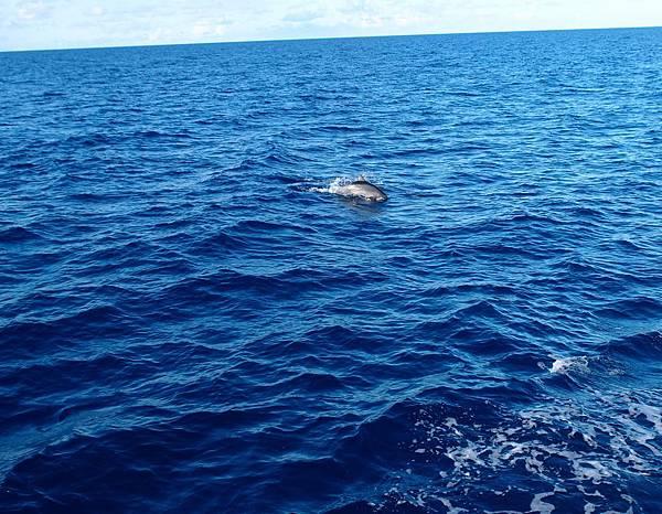 20140827賞鯨089