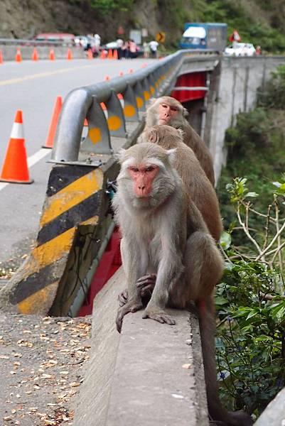 20150303拍攝於登仙橋010