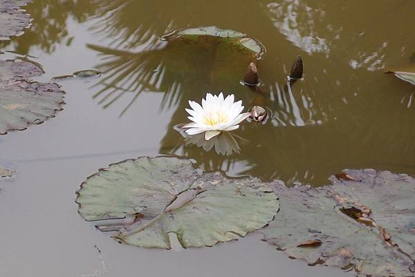 20150304拍攝於馬太鞍濕地文化館007