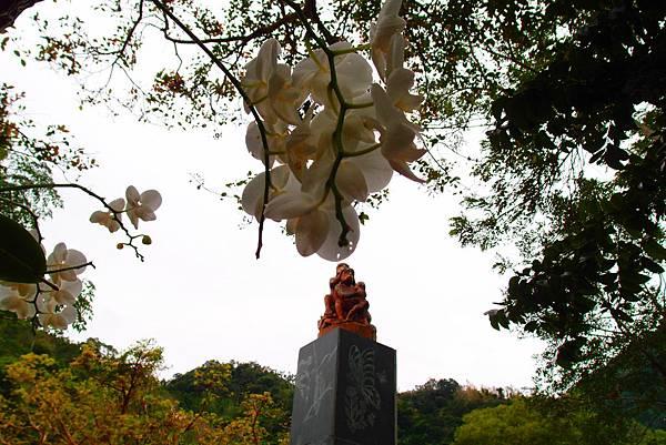 20160222拍攝於知本國家森林遊樂區040