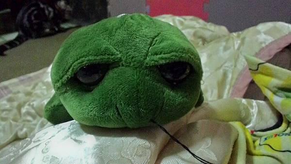 20160630拍攝於龜龜