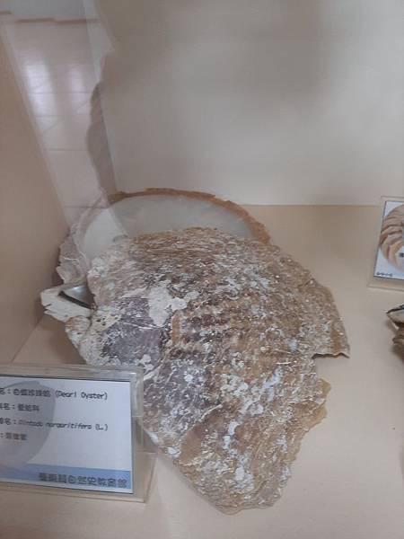 20200205台東縣自然史教育館 (3).jpg