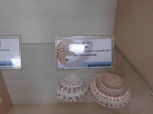 20200205台東縣自然史教育館 (20).jpg