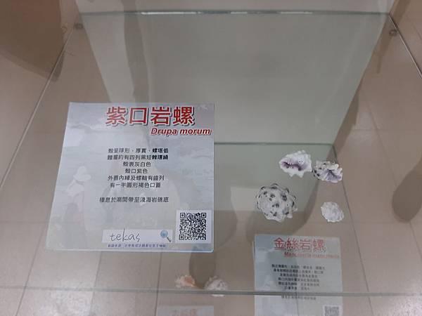 20200205台東縣自然史教育館 (36).jpg