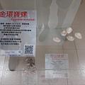 20200205台東縣自然史教育館 (37).jpg