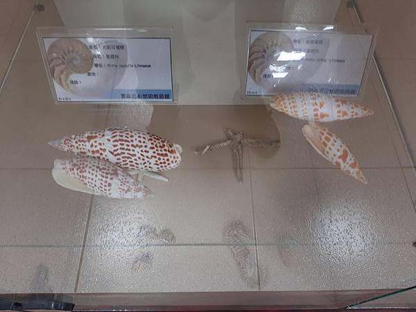 20200205台東縣自然史教育館 (39).jpg