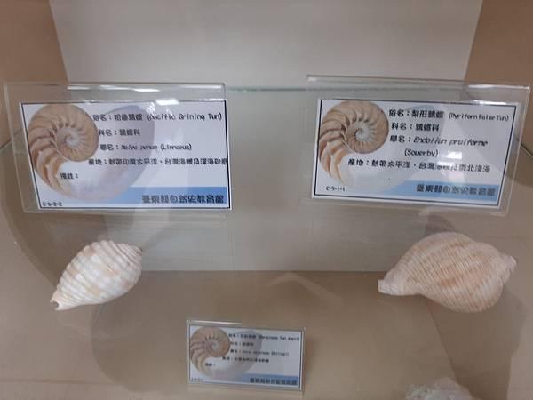 20200205台東縣自然史教育館 (44).jpg