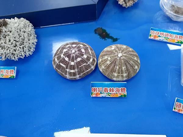 20200205台東縣自然史教育館 (54).jpg