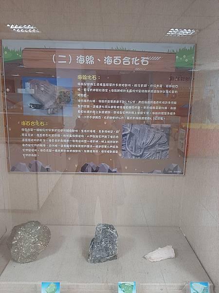 20200205台東縣自然史教育館 (57).jpg