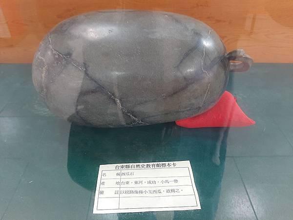 20200205台東縣自然史教育館 (55).jpg