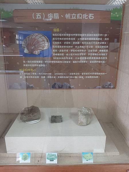 20200205台東縣自然史教育館 (60).jpg