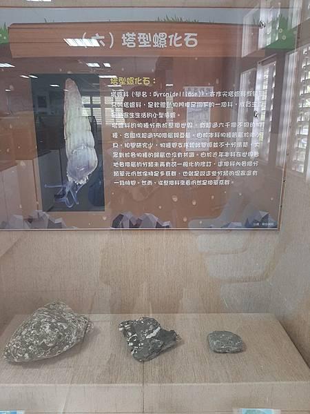 20200205台東縣自然史教育館 (61).jpg