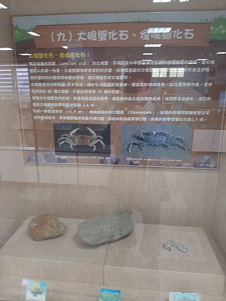 20200205台東縣自然史教育館 (67).jpg