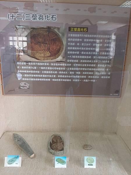 20200205台東縣自然史教育館 (71).jpg