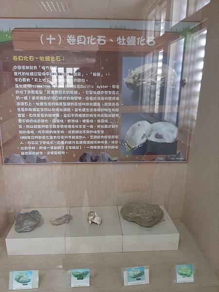 20200205台東縣自然史教育館 (69).jpg
