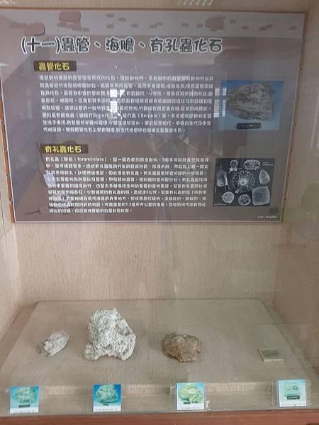 20200205台東縣自然史教育館 (70).jpg