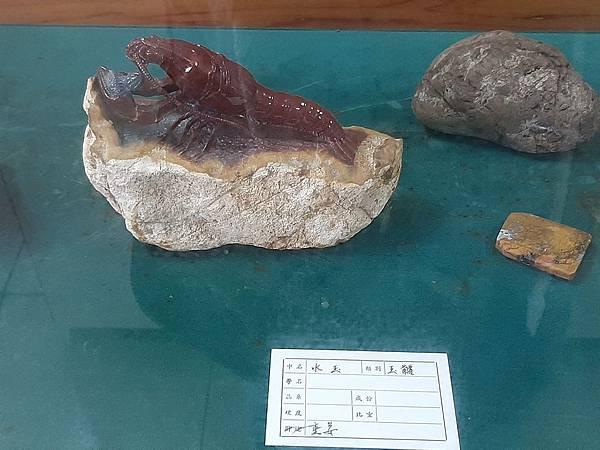 20200205台東縣自然史教育館 (80).jpg