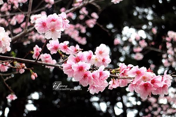 IMG_8194_副本.jpg