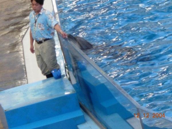 931212 海洋公園海豚2~2.jpg