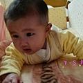 PIG_6545_meitu_14.jpg