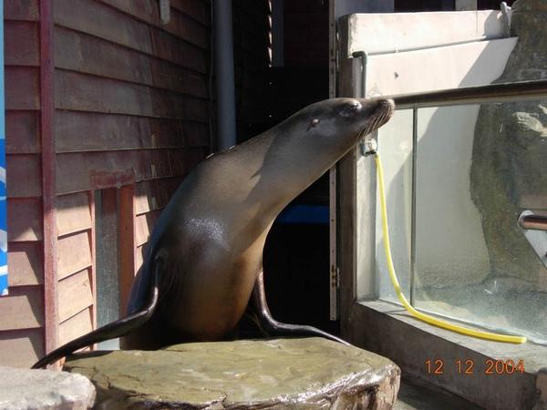 931212 海洋公園海獅~2.jpg
