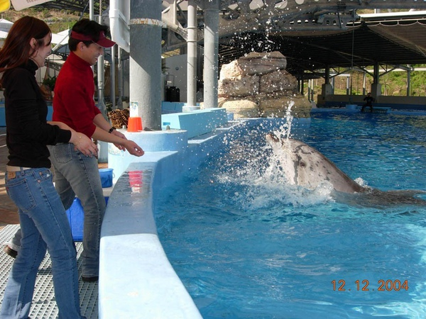931212 海洋公園海豚9~2.jpg
