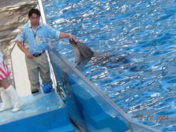 931212 海洋公園海豚1~2.jpg