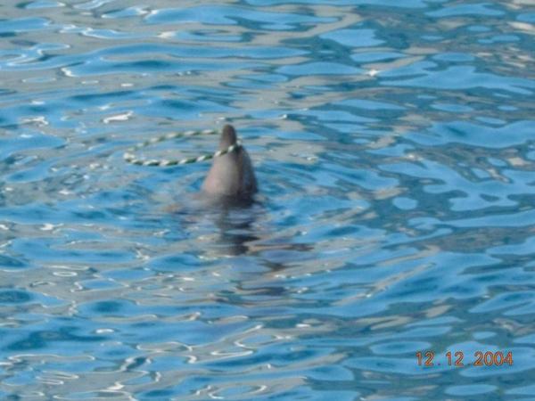 931212 海洋公園海豚4~2.jpg