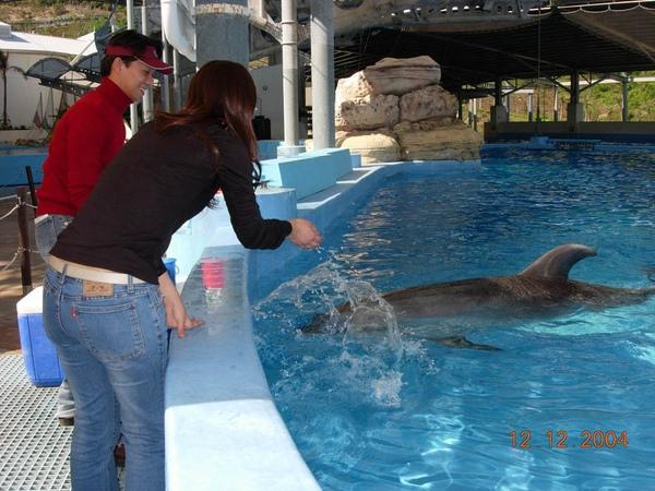 931212 海洋公園海豚11~2.jpg