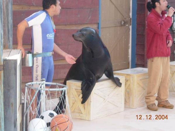 931212 海洋公園海獅2~1.jpg