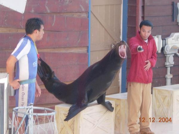 931212 海洋公園海獅1~1.jpg