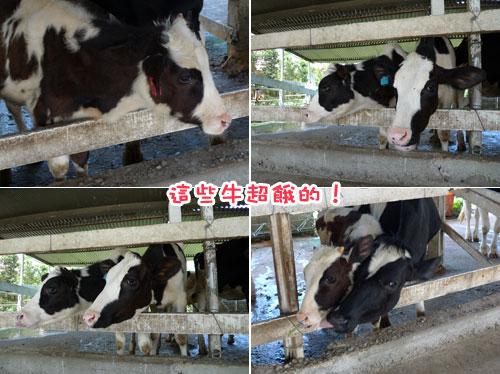 員工旅遊---超餓的牛.jpg