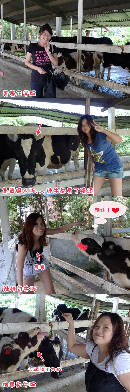 員工旅遊---跟牛拍照.jpg