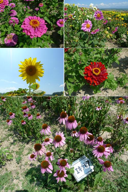 北海道D3-fl花兒們.jpg