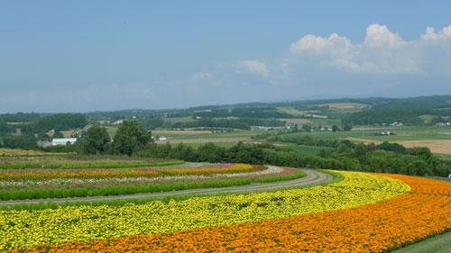 北海道D3-fl花們1.jpg